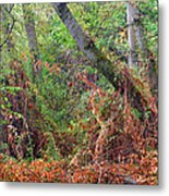 The Deep Rainy In The Mysterious Forest Metal Print