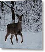 The Deer In The Snow Metal Print
