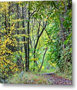 The Dense Forest Metal Print