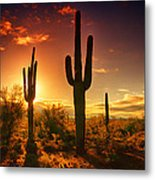 The Desert Awakens  Metal Print