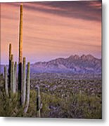 The Desert Beckons  Metal Print