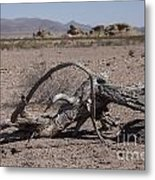 The Desert Floor Metal Print