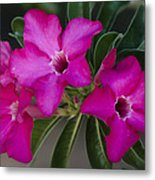 The Desert Rose  Metal Print