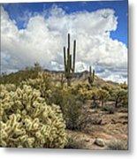 The Desert Southwest Metal Print