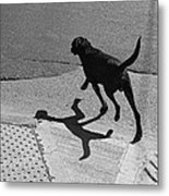 The Dog -and The Cat- Metal Print