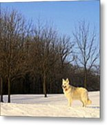 The Dog On The Hill Metal Print