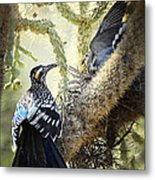 The Dove Vs. The Roadrunner Metal Print
