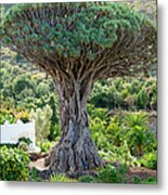 The Dragon Tree / El Drago Milenario Metal Print