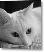 The Dreamer Cat Metal Print