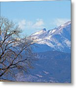 The Eagle's View Metal Print