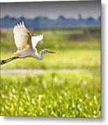 The Egret In Flight Series V3 Metal Print