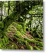 The Elven Forest No2 Wide Metal Print