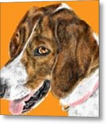 The English Pointer Foxhound Metal Print