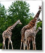 The Extended Family Metal Print