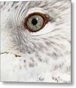 The Eye Of The Gull Metal Print