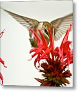 The Eye Of The Hummingbird Metal Print