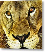 The Eyes Have It Metal Print