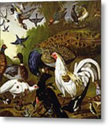 The Fable Of The Raven With A Peacock, Cockerel, Woodpecker, Jay, Woodcock, And Magpie Metal Print