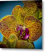 The Face Of Color Metal Print