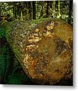 The Fallen Collection 6 Metal Print
