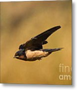 First Swallow Of Spring Metal Print