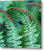 The Fern Metal Print
