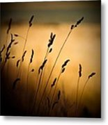 The Field Metal Print