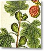 The Fig Tree Metal Print