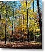The Final Days Of Autumn Color Metal Print