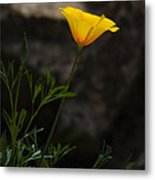 The First Poppy  Metal Print