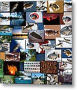 The Fishing Hole Collage Rectangle Metal Print