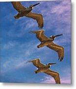 The Flight Of The Pelican Metal Print