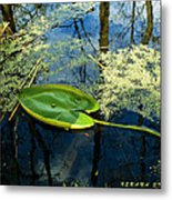 The Floating Leaf Of A Water Lily Metal Print