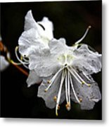 The Flower Metal Print
