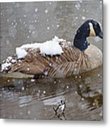 The Flurry Collector Metal Print