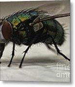 The Fly Macro Metal Print