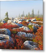 The Fog Clears At Dolly Sods Metal Print