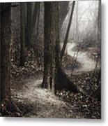 The Foggy Path Metal Print by Scott Norris