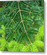 The Freshness Of New Growth Is A Thing Of Beauty And Wonder Metal Print