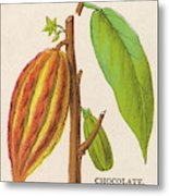 The Fruit Of The Cocoa (or  Chocolate) Metal Print