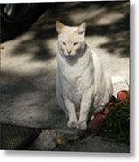 The Garden Cat Metal Print