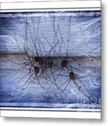 The Gathering - Long Leg Spiders Metal Print