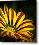 The Gazania Metal Print