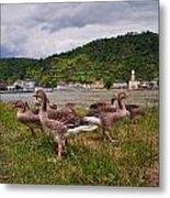The Geese Of St Goar Am Rhein Metal Print