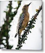 The Gila  Woodpecker Metal Print