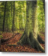 The Giving Tree Metal Print