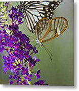 The Glasswing And A Friend  Metal Print