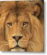 The Glory Of A King Metal Print