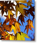 The Golden Hues Of Autumn  Metal Print