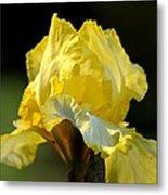 The Golden Iris Metal Print